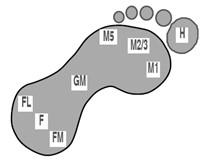 8 Regionen des Fußes